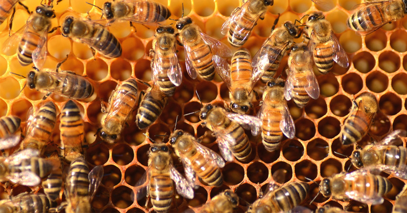 europe bees FI