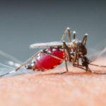 mosquito blood type FI
