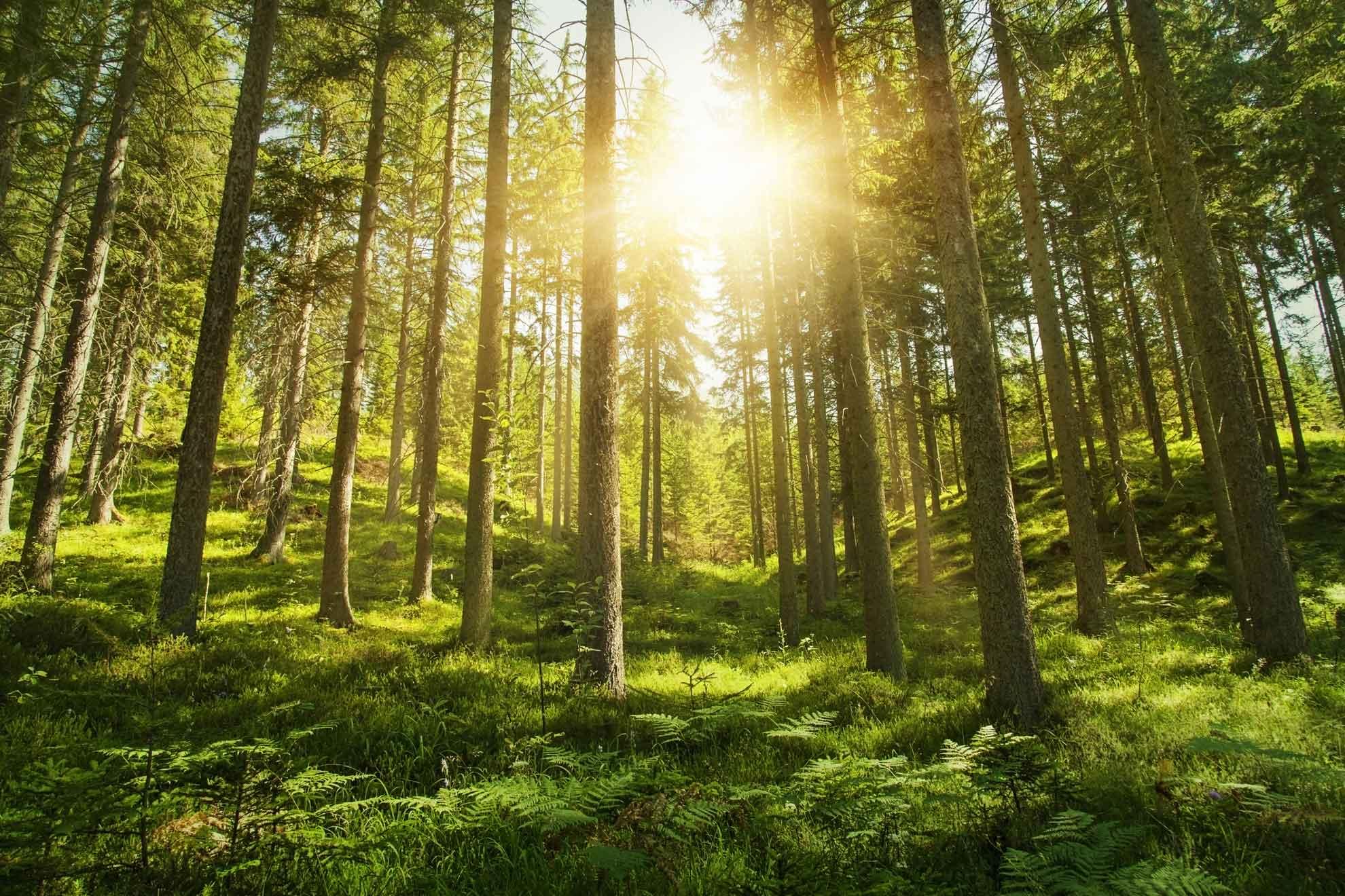 fresh air natural remedies the flu