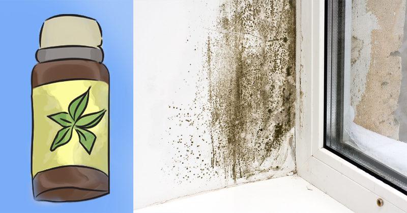 mold essential oil FI