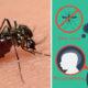 zika signs FI