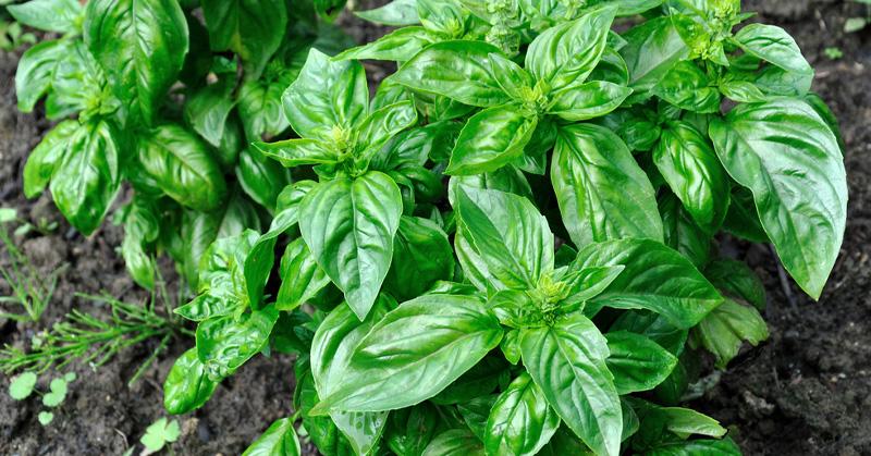 7-herbs-fi