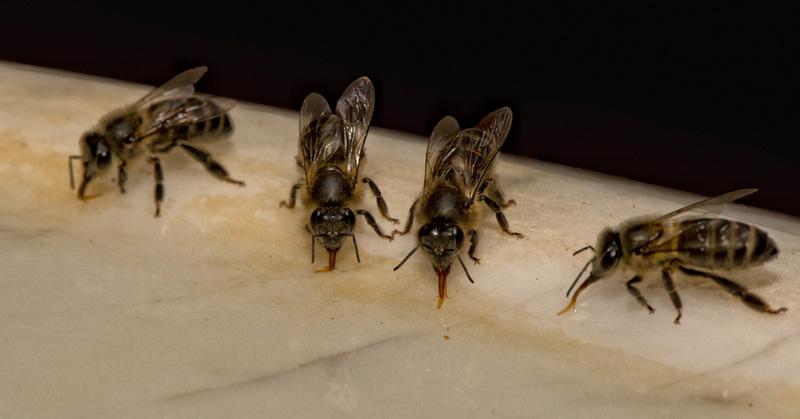 bee-waterer-fi