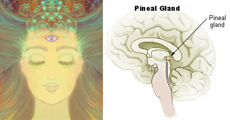 3 Simple Ways To Decalcify Your Pineal Gland & Boost Awareness ...