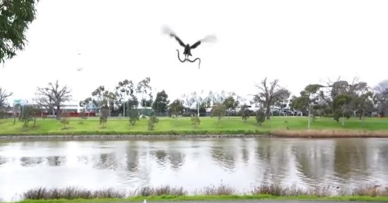 hawk spider FI