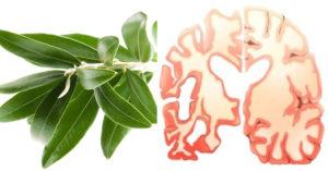 olive leaf FI