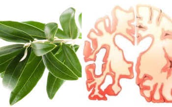 THIS Simple Leaf Prevents Strokes, Diabetes, Alzheimer's And So Much More!