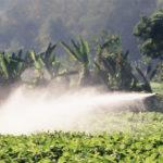 fruits pesticides FI