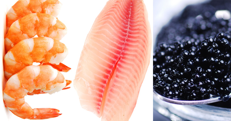 seafood never eat FI