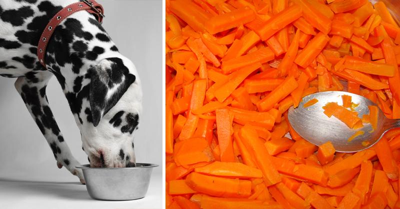 healthy dog food FI