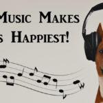 music dogs FI
