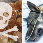 dog food recall FI