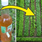 urine fertilizer FI