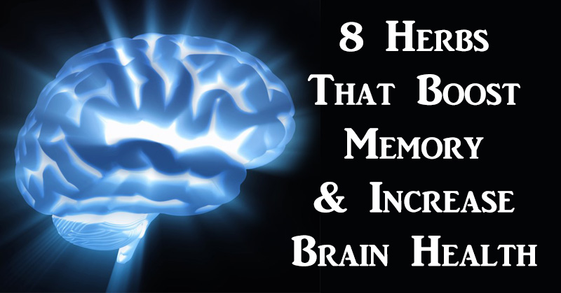 Memory power increasing diet