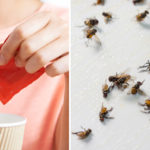 sweetener insecticide FI