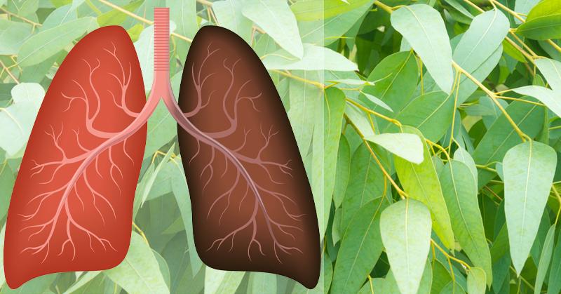 plants herbs repair lung damage FI