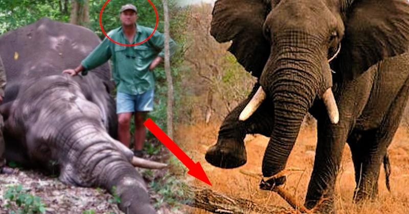 white mans burden shooting elephant Shooting_an_elephant_essayodt: file size:  download file white_mans_burden_analysisodt: file size: 16 kb: file type: odt: download file test_imperialismodt.
