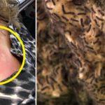 infestation moth FI