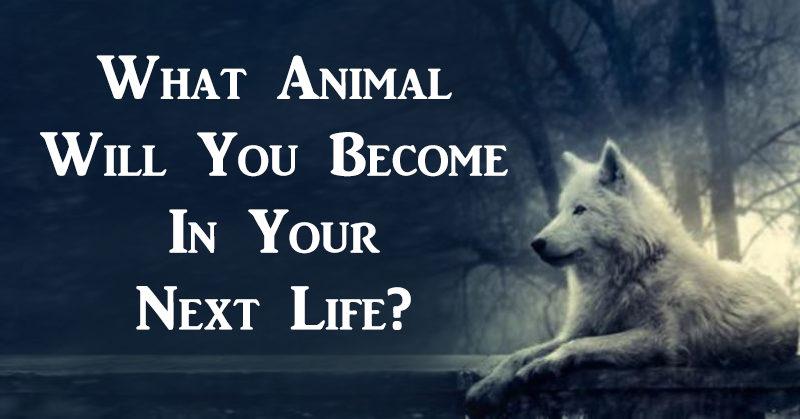 animal become FI