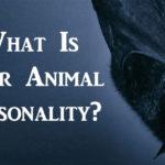 animal personality FI