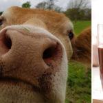 brown cow milk FI