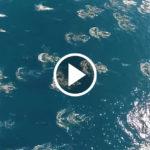 drone migration FI
