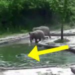 elephant rescue FI