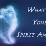 spirit animal FI