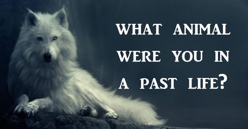 animal past life FI