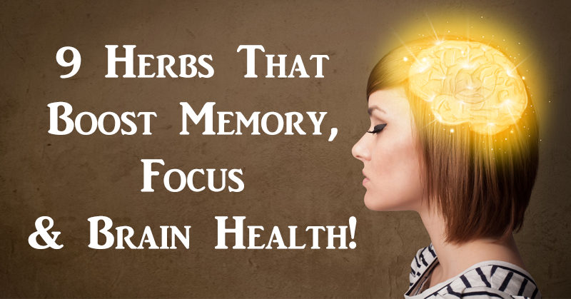 herbs brain FI