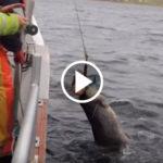 seal rescue FI