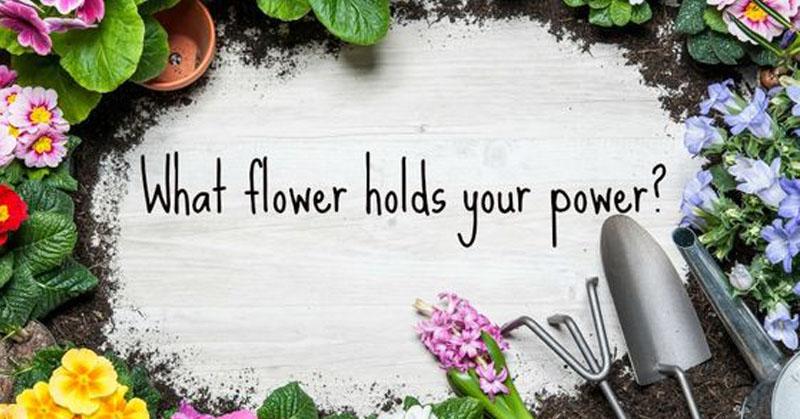 flower personality FI