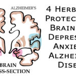 herbs brain FI02
