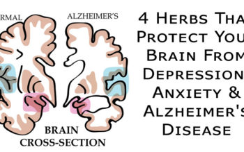 4 Herbs That Protect Your Brain From Depression, Anxiety & Alzheimer's Disease