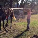 horse girls dance FI