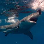 shark aquarium FI
