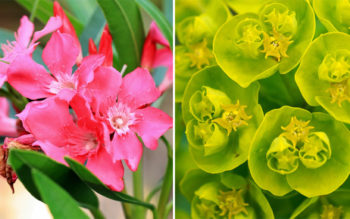 9 Common Plants That Are Highly Toxic