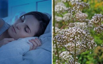 The Powerful Herb That Lowers Blood Pressure, Reduces Anxiety & Helps You Sleep!