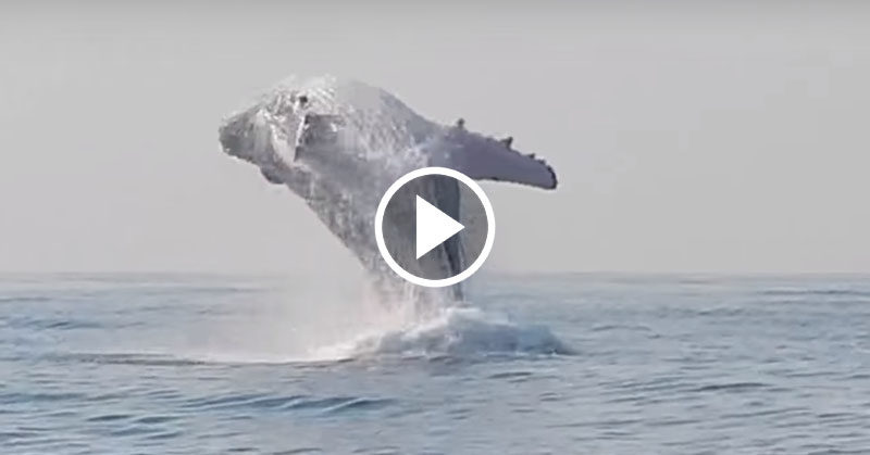 whale jump FI