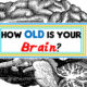 brain age FI