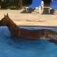 horse swim FI