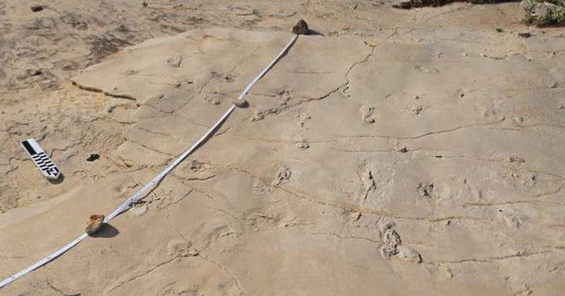 human footprints FI