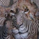 lion zebra FI