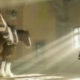 clydesdale donkey FI