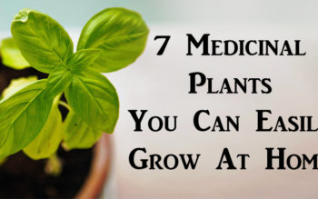 7 Medicinal Plants You Can Easily Grow At Home