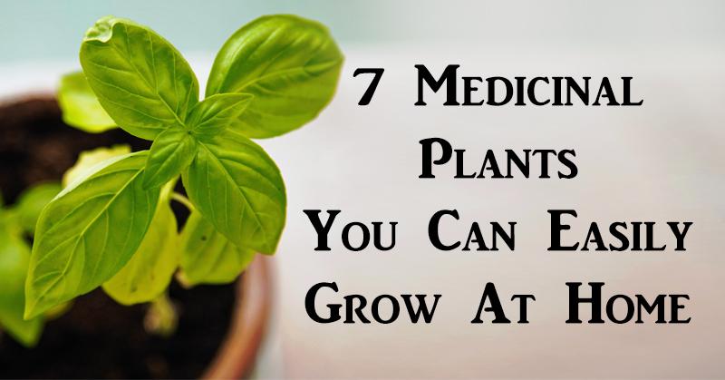 medicinal plants FI