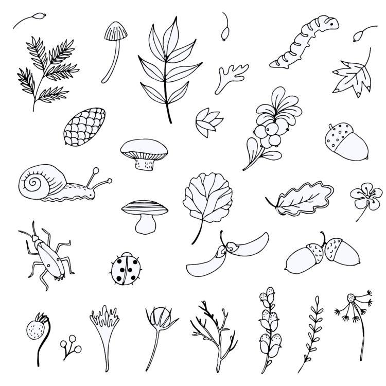 Nature Centered Design Nature