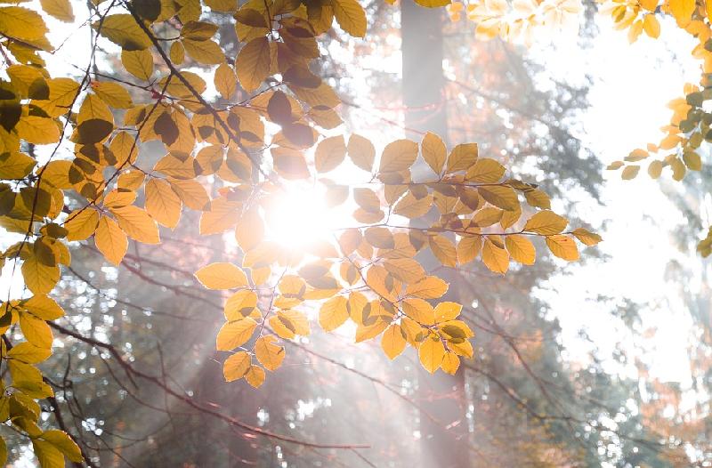 osteopenia sunlight