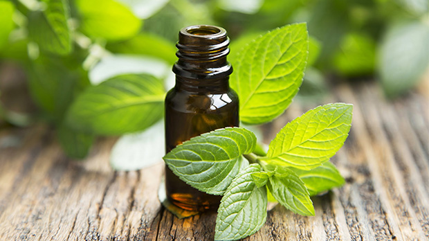 hepatitis a peppermint essential oil