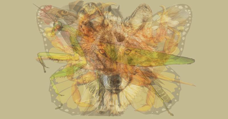 animal dominant personality FI